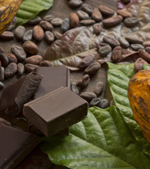 Cacao-and-chocolate