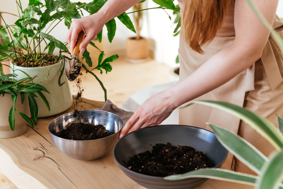 Learn how to compost at home