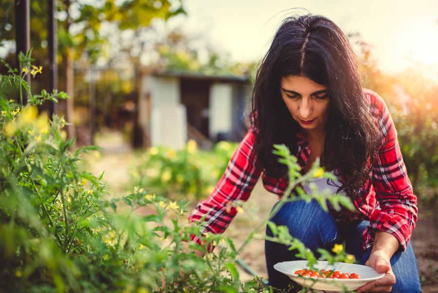 Agricultura sustentable como uno de los principios de la gastronomía sustentable