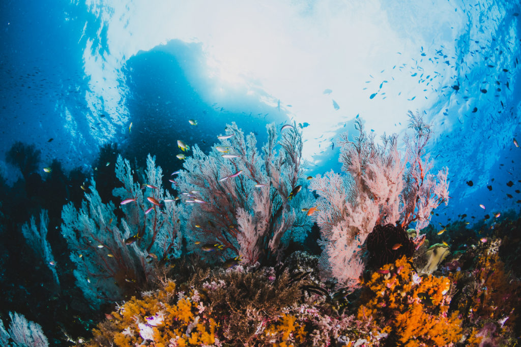 Vida marina en los océanos