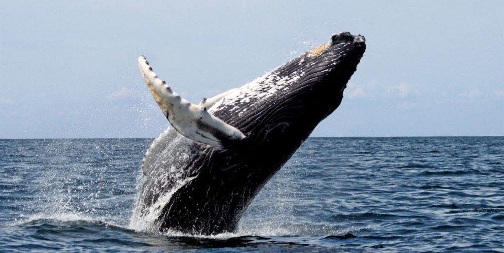 whale-watching-Sayulita