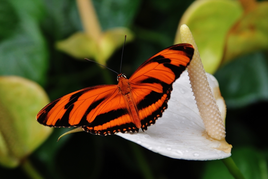 A closeup shot of a butterfly, the totem of SE Spa in Grand Velas Riviera Nayarit