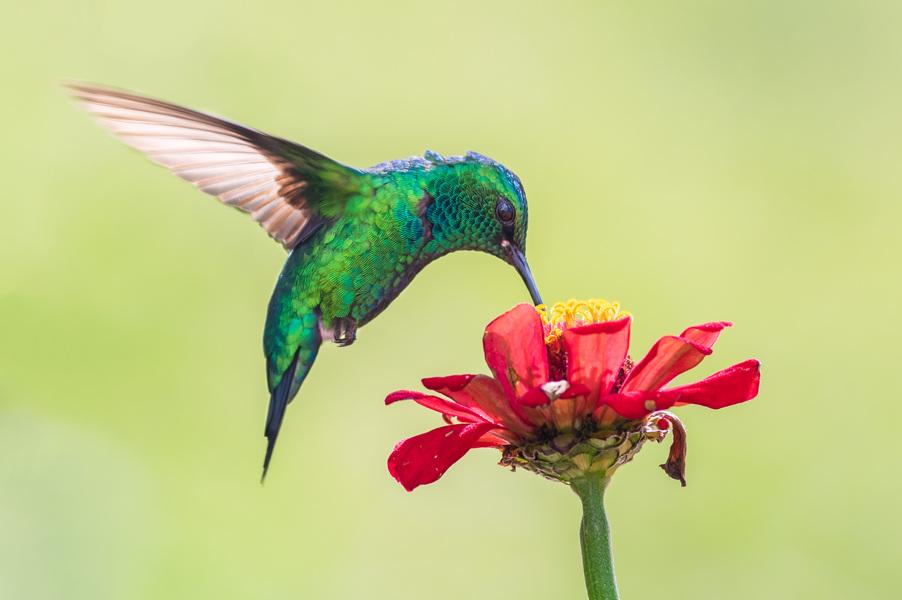 Colibri, tótem espiritual de SE Spa en Grand Velas Riviera Maya