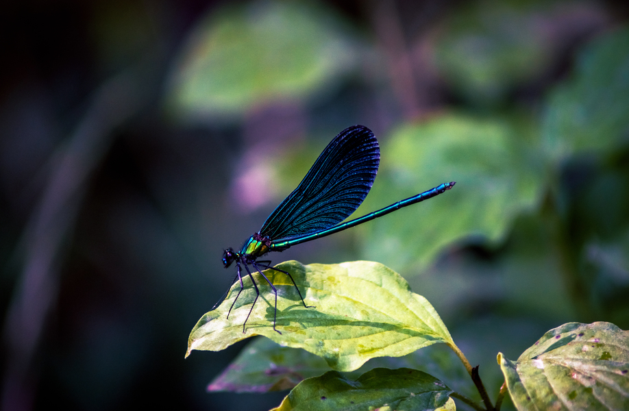 Emerald dragonfly, totem of SE Spa in Grand Velas Los Cabos