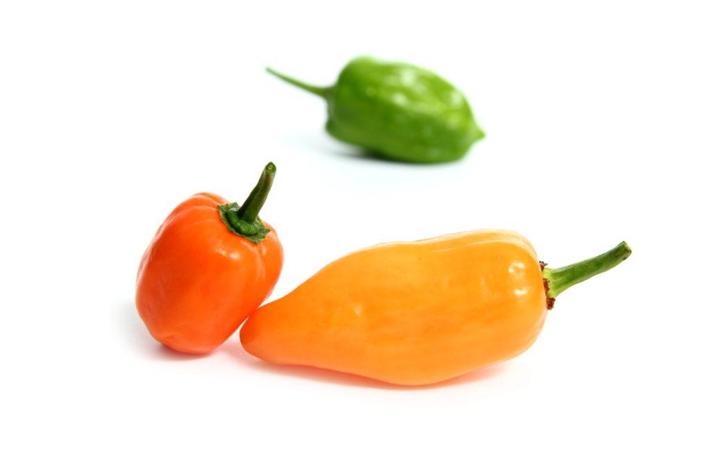 Habanero chili sauce recipe
