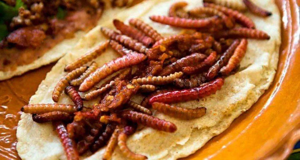 Mezcal-worm