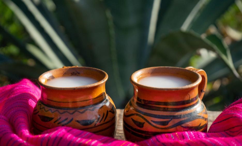 pulque-drink