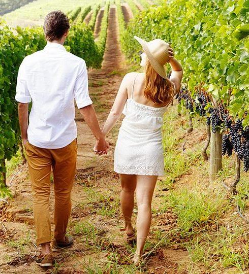 Vineyard-tour